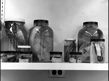 Biological specimens in jars, including fish and snakes, at the Environmental Science Centre in Kananaskis Country, 1966.